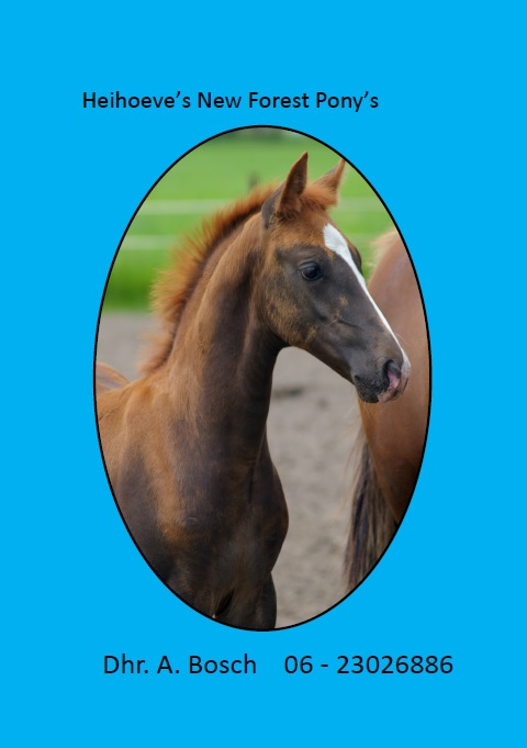 Logo Heihoeve s New Forest Pony s