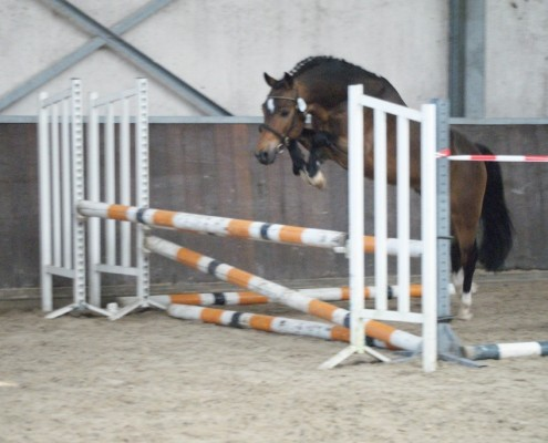 Comm Forest Dille - 1e plaats 2015